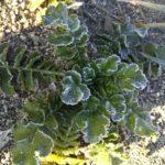 土も凍る極寒の畑